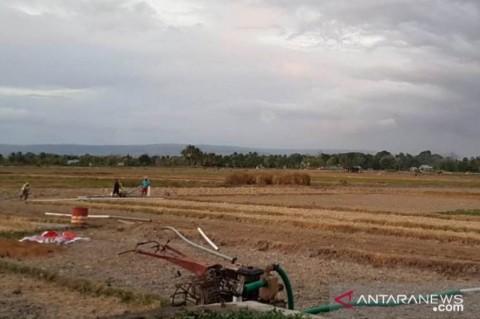 12 Kabupaten/Kota di NTT Terancam Kekeringan