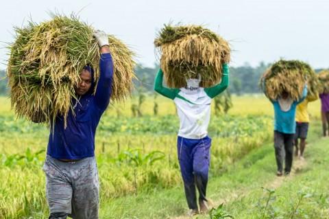 Pemerintah Perluas Akses Produk Pertanian dan Pangan