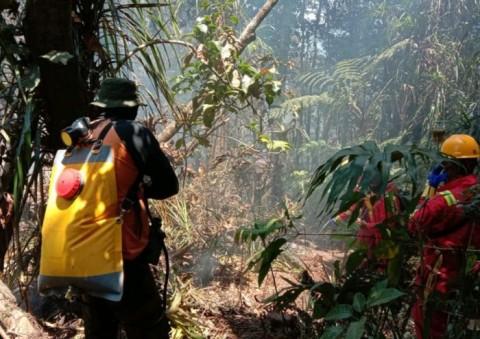 Hutan Gunung Tangkuban Parahu Kebakaran