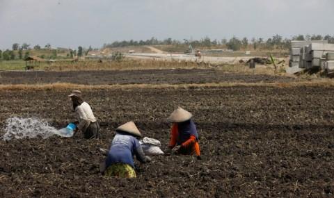 Sokong Serapan Produk Petani di Tengah Pandemi
