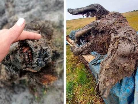 Fosil Lengkap Beruang Zaman Es Ditemukan di Rusia