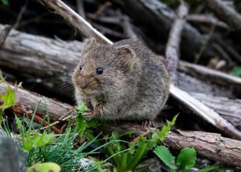 Dampak dari Gigitan Tikus