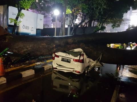Hujan Deras di Jakpus, Pohon Berumur 40 Tahun Roboh