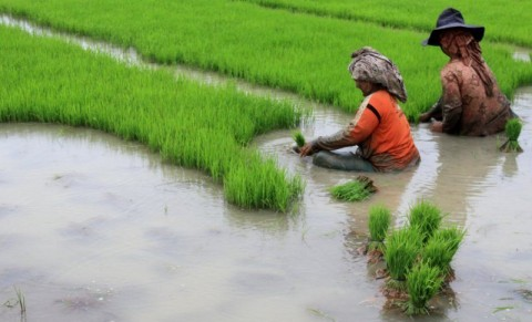 Rehabilitasi Jaringan Irigasi Tersier Berikan Manfaat kepada Petani