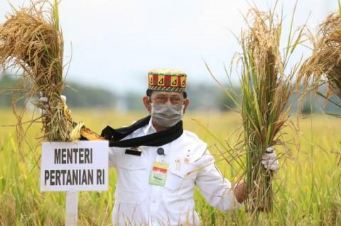 Mentan Rayakan Panen Padi di Aceh Besar