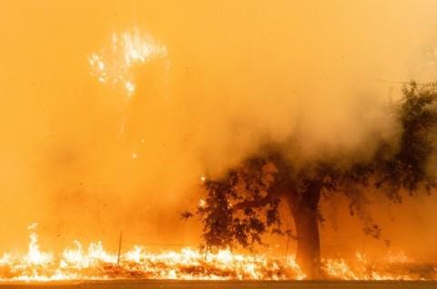 Kebakaran Hutan California Hanguskan 1,6 Juta Hektare Lahan