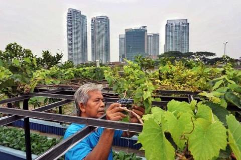 Mentan: <i>Urban Farming</i> Bisa Tambah Penghasilan Warga Jakarta