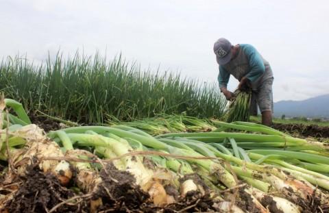 Mentan: Asuransi Usaha Tani Jaga Lahan Petani dari Gagal Panen