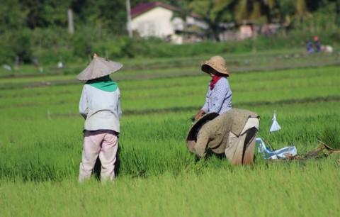 Mentan Dorong Kinerja Pertanian Sukabumi Meningkat