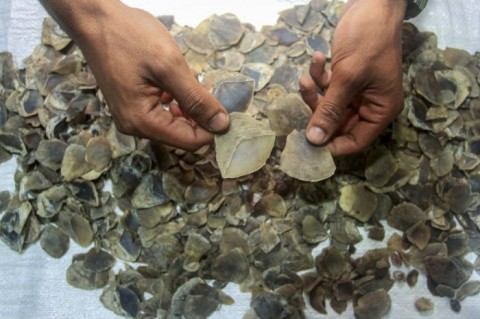 KLHK Gagalkan Transaksi Perdagangan Sisik Trenggiling di Jambi