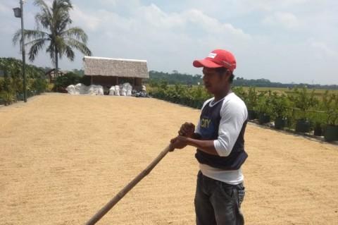 Pendapatan Ekonomi Petani Banten Selatan Meningkat