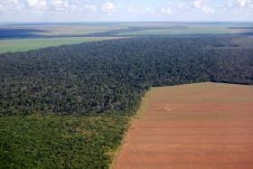 Pilihan Pangan Menghancurkan Hutan dan Mendekatkan Kita dengan Virus
