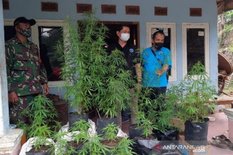 BNN Telusuri Dugaan Kebun Ganja di Tasikmalaya