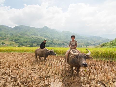 Dinas Pertanian OKU Targetkan Cetak 18.804 Keping Kartu Tani
