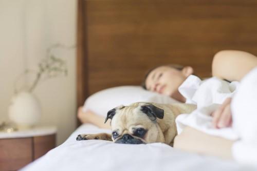 Tidur bersama anjing di satu tempat tidur bisa mempengaruhi kualitas tidur kamu. (Ilustrasi/Pexels)