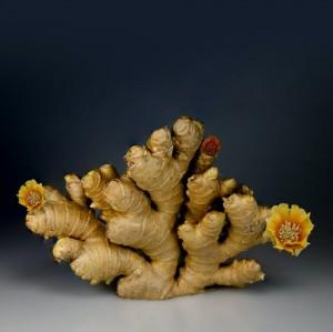 Beberapa Kombinasi Herbal untuk Mengaktifkan Sistem Kekebalan Tubuh