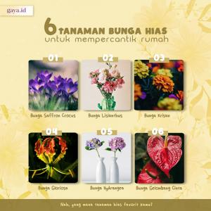 6 Bunga Hias untuk Mempercantik Rumahmu