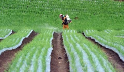 Pemerintah Didorong Berpihak kepada Petani