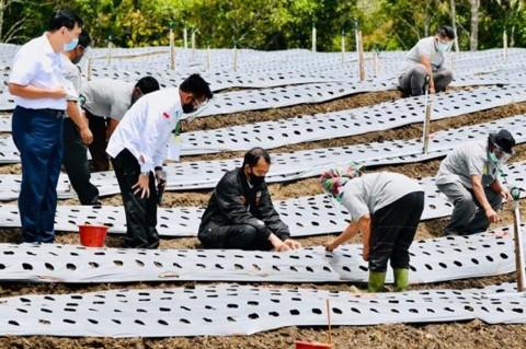 Jokowi: Lumbung Pangan Sumut Jadi Contoh Provinsi Lain