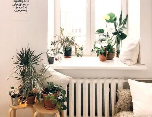 Coba tata tanaman di pot bersama keluarga sebagai salah satu ide liburan di rumah saja saat pandemi covid-19. (Foto: Pexels.com)