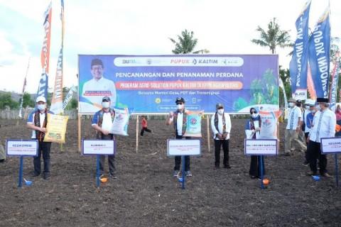 Pupuk Indonesia Dongkrak Produktivitas Jagung di Dompu