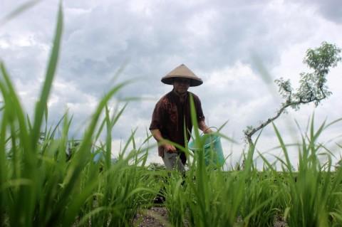 NasDem Berupaya Katrol Kesejahteraan NTT Lewat Pertanian