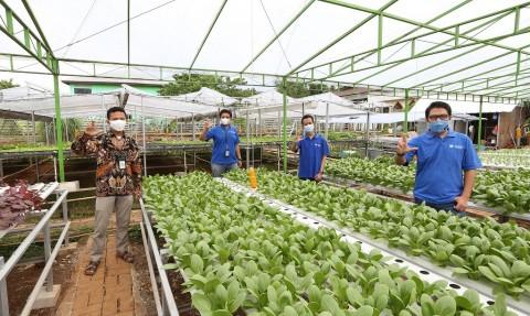 XL Axiata Tawarkan Solusi IoT untuk Urban Farming