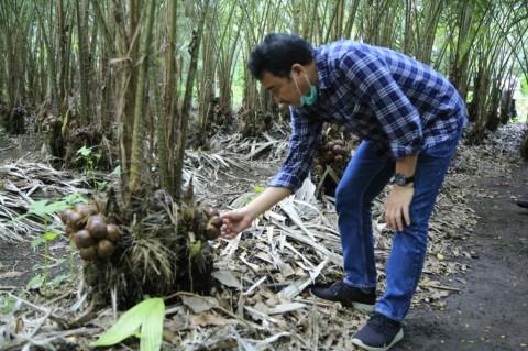 LPDB KUMKM Gelontorkan Rp1,1 Miliar untuk Petani Salak Madu di Sleman
