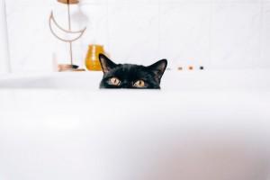 Studi: Kucing Lebih Rentan Tularkan Covid-19