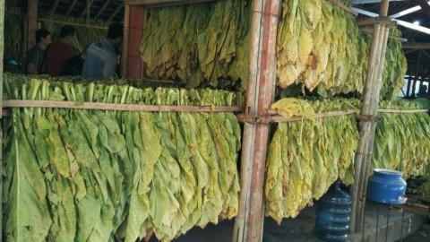 Petani Tembakau: Tidak Ada Kenaikan Cukai Bisa Cegah PHK