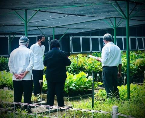 Jokowi Tinjau Pembangunan Pusat Perbenihan untuk Atasi Bencana Ekologis