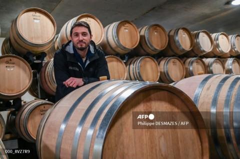 Pembuat Anggur Italia Adaptasi dengan Pasar Tiongkok