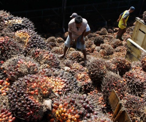 Aprobi: BBN Berbasis Sawit Harapan Ketahanan Energi Indonesia