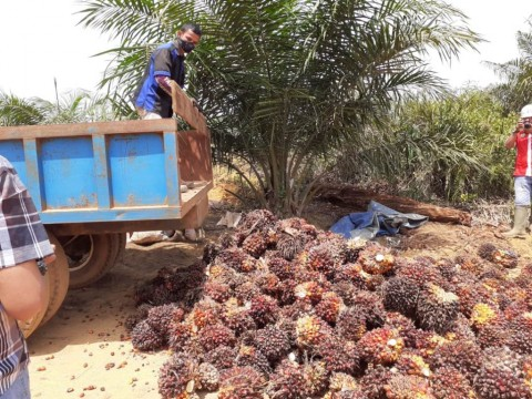 Sri Mulyani Tetapkan Penyesuaian Tarif Pungutan Ekspor Kelapa Sawit