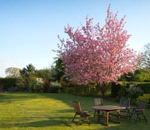 4 Cara Membuat Taman di Rumah Lebih Hidup
