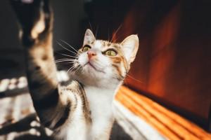 7 Benda di Rumah yang Berbahaya bagi Kucing