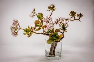 Mengapa Beberapa Tanaman Tumbuh Lebih Baik di Ruangan Tertentu?