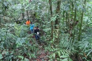 Hutan Sosial Hingga Lahan Gambut Jadi Fokus KLHK pada 2021