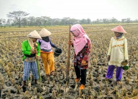 Kementan Manfaatkan Kenaikan Harga untuk Gairahkan Produktivitas Petani Kedelai
