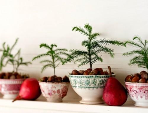 Cemara Norfolk ini merupakan pilihan yang cocok sebagai tanaman dalam ruangan. (Foto: Dok. Helen Norman/Bhg.com)