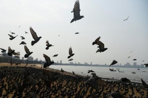 Antisipasi Wabah Flu Burung, India Musnahkan Ribuan Unggas