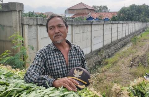 Petani di Lahan TPU Rorotan Khawatir Kehilangan Nafkah