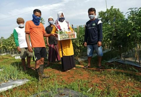 Lahan Tandus di Bangkalan Disulap Jadi Penghasil Tanaman Hortikultura