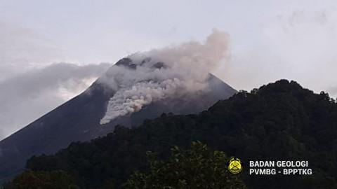 Gunung Merapi Muntahkan Lava Pijar 42 Kali dalam 24 Jam
