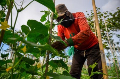 Lahan Tidur di Menteng Boleh Dipakai untuk <i>Urban Farming</i>