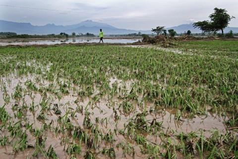 Asuransi Bantu Petani Kalsel Atasi Kerugian Akibat Banjir