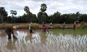 Kementan Imbau Petani Bojonegoro Ikut Asuransi untuk Hindari Kerugian