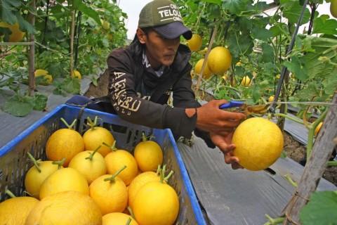 Pemerintah Kembangkan Kemitraan untuk Ekosistem Rantai Pasok Produk Hortikultura