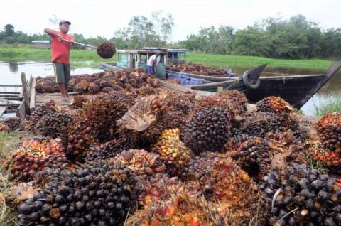 Indonesia Siap Ekspor 2.000 Ton Limbah Sawit per Bulan ke Malaysia