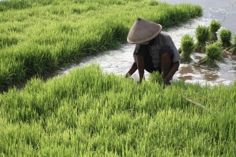 Petani Ponorogo Merasakaan Manfaat Program RJIT dari Kementan